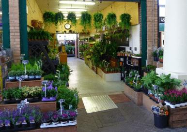 Магазин цветов и растений на продажу